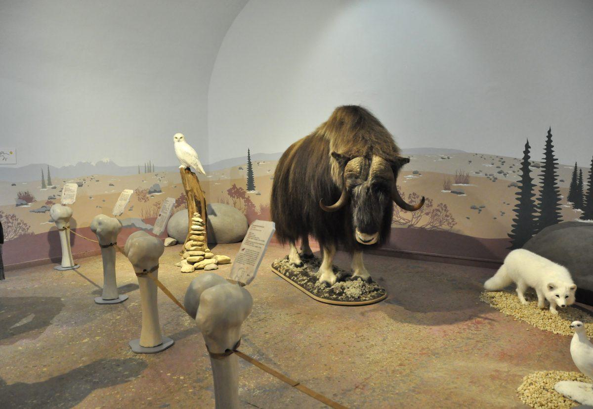 """Blick in die Ausstellung """"Eiszeitsafari"""" im Landesmuseum Koblenz, Bison mit Schneeeule und Schneefuchs im Bild"""