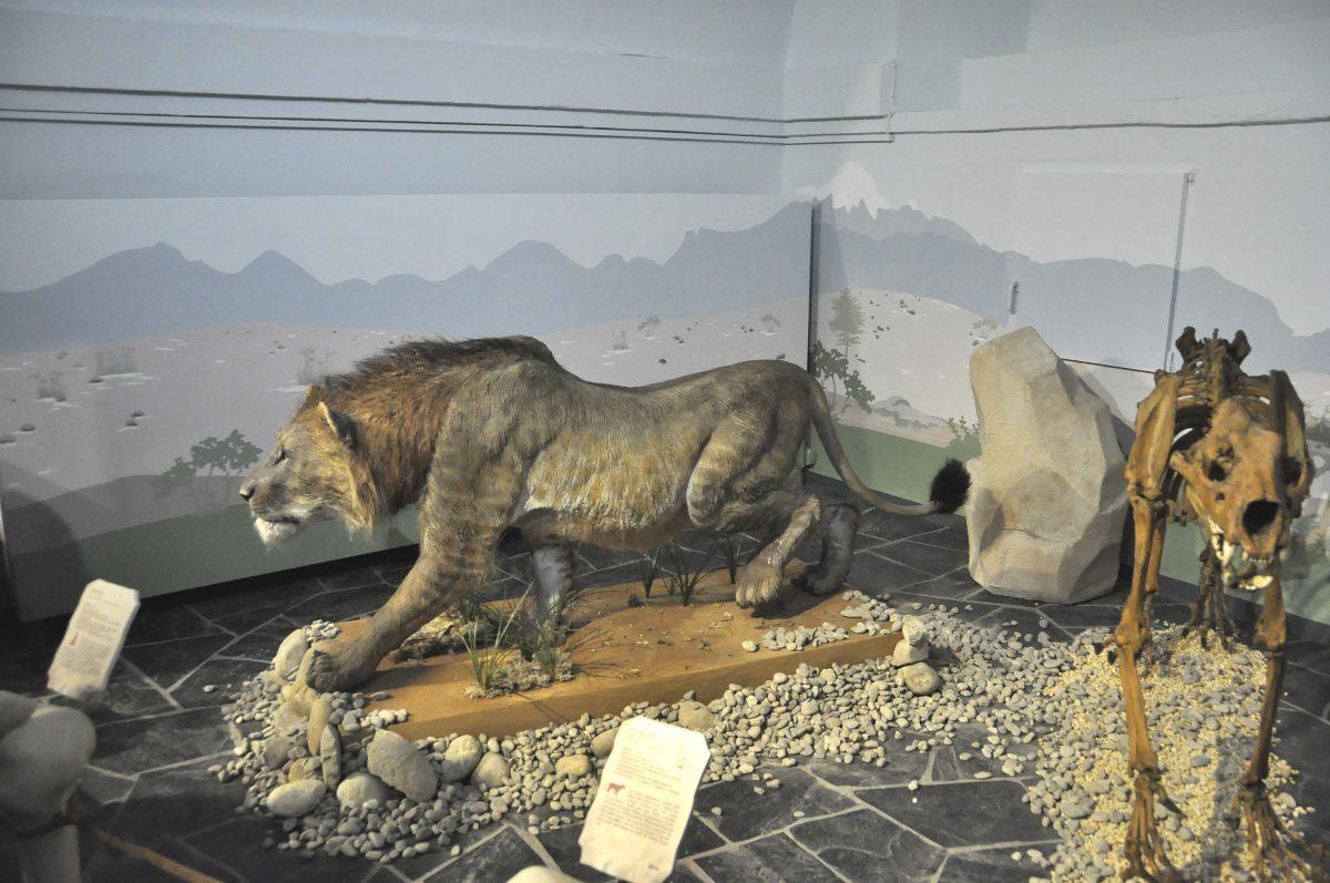 """Blick in die Ausstellung """"Eiszeitsafari"""" im Landesmuseum Koblenz, Säbelzahntiger im Bild"""