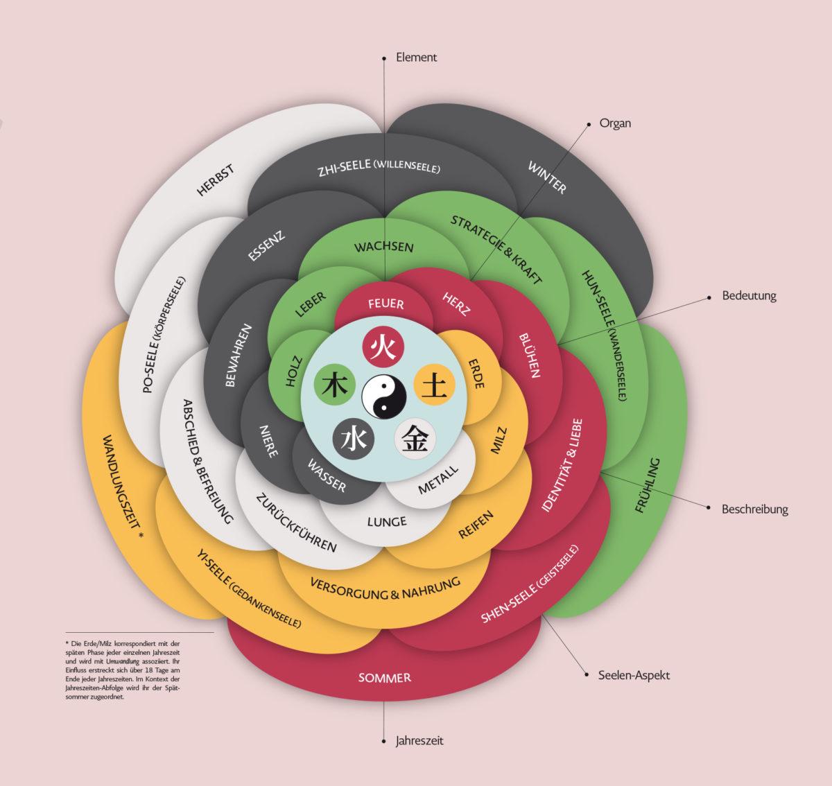 Infografik der Fünf Elemente Wu Xing und deren Bedeutung für die zugeordneten Organe